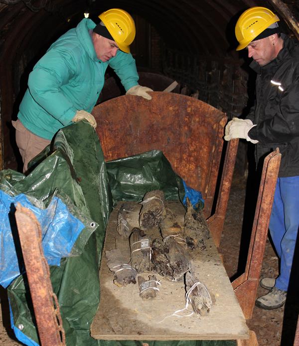 Hölzer aus der Grabung werden in einem Stollen zwischengelagert