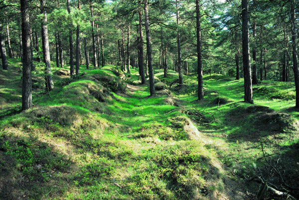 Spuren alter Erzabfuhrwege am Rammelsberg